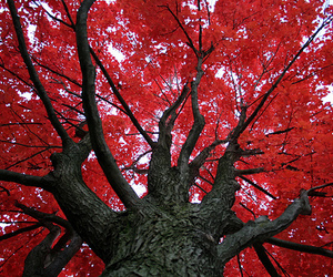 tree, photography, and red image