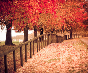 beautiful, trees, and photography image