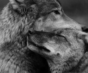 all i need, need, and wolf image