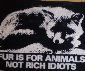 animals, idiots, and truth image