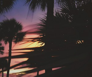 summer, background, and palm trees image