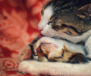 cat, love, and cute image