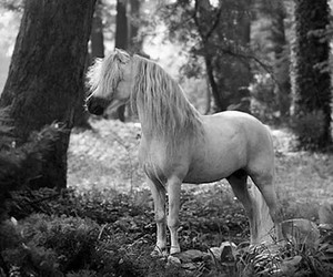 black and white, forest, and mane image