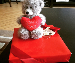 bear, belgium, and chocolate image