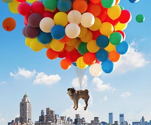 dog, balloons, and pug image