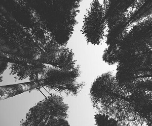 trees and hipster image