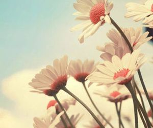 cool, pastel, and flower image