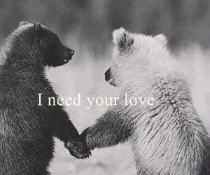 love, bear, and need image