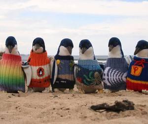 penguins | via Facebook