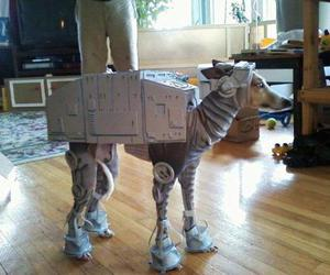 dog, funny, and starwars image