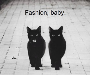 black and white, cats, and fashion image