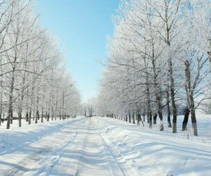 beautiful, heart, and snow image