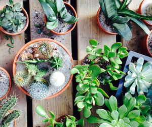 cactus, green, and lovely image