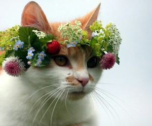 cat, crown, and ute image