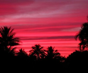 pink, red, and palm trees image