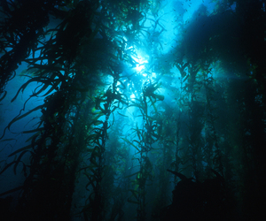 blue, kelp, and nature image