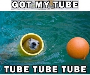 funny, lol, and tube image