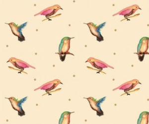 background, bird, and color image