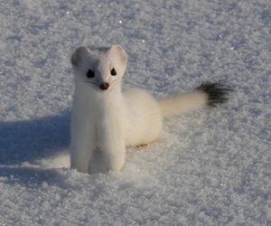 snow, cute, and white image