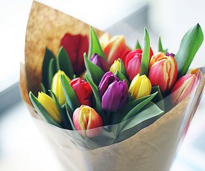 flowers, tulips, and pretty image