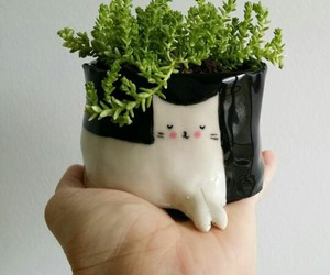 plants and cat image