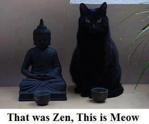 cat, zen, and meow image