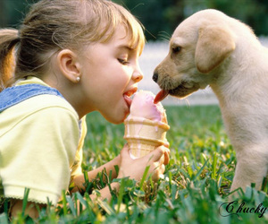dog, ice cream, and puppy image