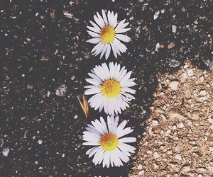 flowers, pretty, and row image
