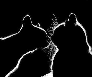 cat, black and white, and kiss image