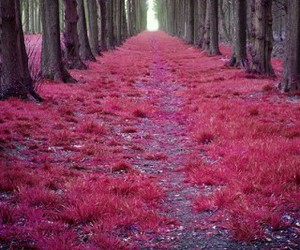 pink, forest, and tree image