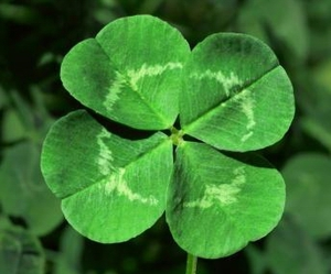green, nature, and clover image