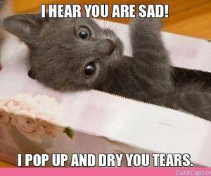 aww, cheer up, and kitten image