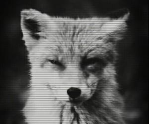 fox and grunge image
