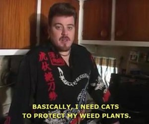 cats and weed image