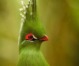 bird, funny, and green image