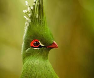 nature, bird, and adventure image