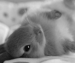 beautiful, bunny, and Dream image