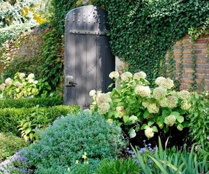 garden and hydrangeas image