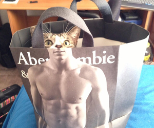 cat, funny, and abercorombe image