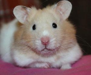 bolt, hamster, and little image