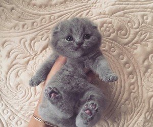adorable, animal, and fashion image