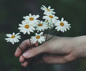 blumen, daisies, and flowers image