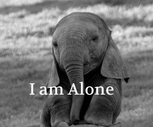 alone, cute animal, and cutie image
