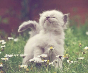 adorable, cat, and grey image
