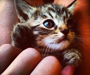 kitty, cute, and cat image