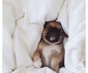 bed, puppy, and dog image