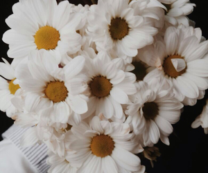 daisy, flower, and mine image