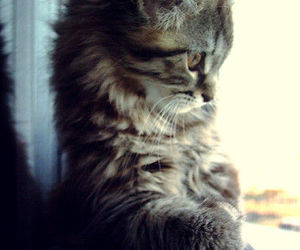 cat, tumblr, and cute image