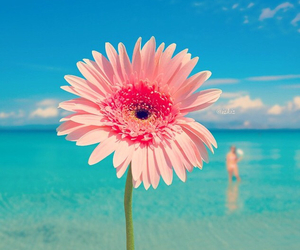 flowers and sea image