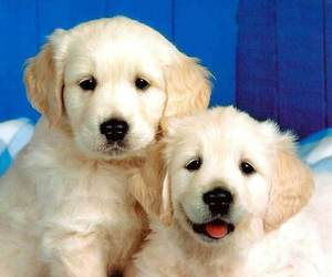 puppy, sweet, and ofsofi image